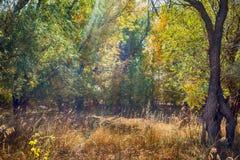 秋天神仙的森林颜色 图库摄影