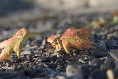 秋天秀丽是颜色 库存图片