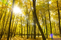 秋天秀丽自然场面 秋季公园秋天树秋天为 免版税库存照片