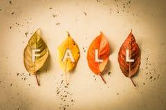 秋天秋天与四片五颜六色的叶子的海报设计 库存图片