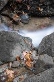 秋天秋天与河溪流动和橡木槭树叶子关闭的森林风景 库存照片