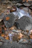 秋天秋天与河溪流动和橡木槭树叶子关闭的森林风景 免版税图库摄影