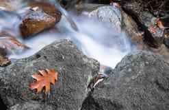 秋天秋天与河溪流动和橡木槭树叶子关闭的森林风景 免版税库存图片