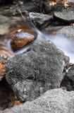 秋天秋天与河溪流动和橡木槭树叶子关闭的森林风景 免版税库存照片