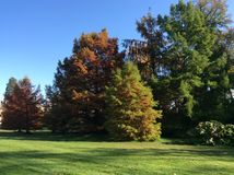 秋天秋天公园色的叶子 图库摄影