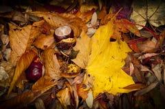 秋天秋天叶子和栗子 库存照片