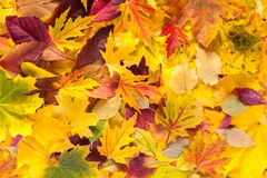 秋天秋天各种各样的色的叶子背景 免版税库存图片