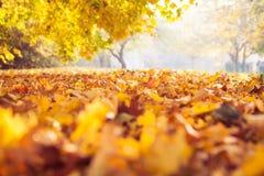秋天秋天地毯 库存图片