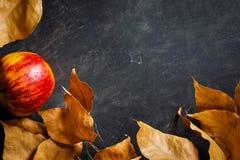 秋天秋天房客框架干燥五颜六色的叶子在黑石背景的红色苹果计算机 文本准备好拷贝空间 库存图片