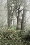 秋天秋天有雾的森林横向 免版税库存照片
