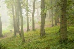 秋天秋天本质有雾的森林横向 图库摄影