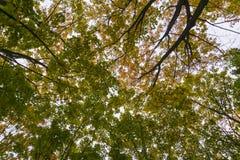 秋天秋天树在有棕色分支和橙黄绿色叶子的森林里在一个晴天室外背景图象的公园为 库存图片