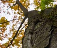 秋天秋天树在有棕色分支和橙黄绿色叶子的森林里在一个晴天室外背景图象的公园从 库存照片