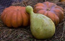 秋天秋天样式的三个南瓜标志 免版税库存图片