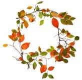 秋天秋天框架叶子 免版税图库摄影