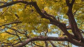 秋天秋天森林路径季节 免版税库存照片