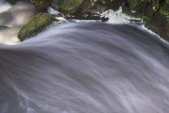 秋天秋天森林风景小河流经的金黄vibra 免版税库存照片