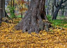 秋天秋天横向留下结构树 免版税库存照片