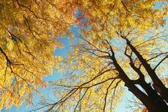秋天秋天横向结构树 库存图片