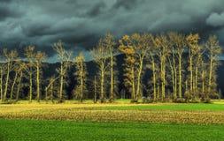秋天秋天横向结构树 免版税库存图片