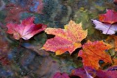秋天秋天留下线路槭树 免版税库存图片