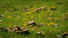 秋天秋天草坪蘑菇 库存照片