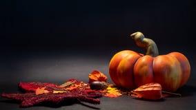 秋天秋天装饰场面用人为南瓜在橙色颜色离开在黑背景 免版税库存图片