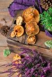 秋天秋天装饰欢乐感恩背景用乳状番红花采蘑菇 免版税库存照片