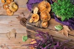 秋天秋天装饰欢乐感恩背景用乳状番红花采蘑菇 库存照片