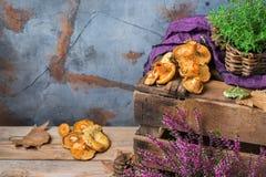 秋天秋天装饰欢乐感恩背景用乳状番红花采蘑菇 库存图片