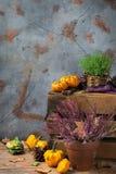 秋天秋天装饰欢乐感恩背景用橙色南瓜 库存照片