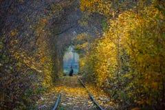 秋天秋天路风景-真正的树挖洞,美好的秋季颜色,晴天 铁路路轨 库存照片