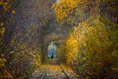 秋天秋天路风景-真正的树挖洞,美好的秋季颜色,晴天 铁路路轨 库存图片