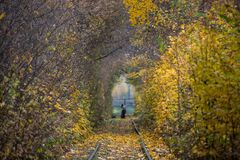秋天秋天路风景-真正的树挖洞,美好的秋季颜色,晴天 铁路路轨 免版税库存照片