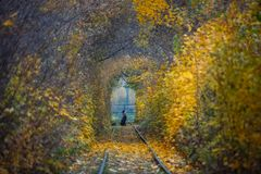 秋天秋天路风景-真正的树挖洞,美好的秋季颜色,晴天 铁路路轨 免版税库存图片