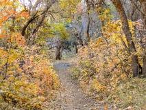 秋天秋天远足通过在罗斯峡谷黄色叉子和大岩石足迹的树的森林视图在Wasatc的Oquirrh山 免版税库存照片