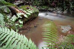 秋天秋天风景在有流动的溪河的美丽的五颜六色的森林里与绿色蕨的长的曝光的 库存照片