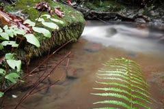 秋天秋天风景在有流动的溪河的美丽的五颜六色的森林里与绿色蕨的长的曝光的 免版税库存照片