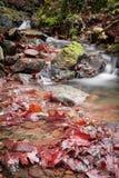 秋天秋天风景在有流动的溪河的美丽的五颜六色的森林里长的曝光的 免版税图库摄影