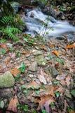 秋天秋天风景在有流动的溪河的美丽的五颜六色的森林里ong曝光的 库存照片