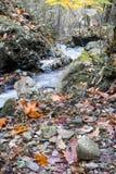 秋天秋天风景在有流动的溪河的美丽的五颜六色的森林里ong曝光的 免版税库存图片