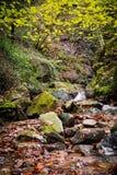 秋天秋天风景在有流动的溪河的美丽的五颜六色的森林里ong曝光的 免版税库存照片