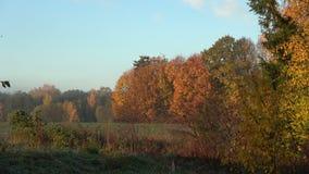 秋天秋天10月在农田里 股票录像
