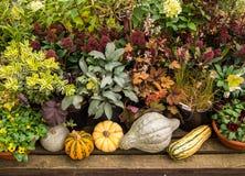 秋天种植庭院显示 免版税库存照片