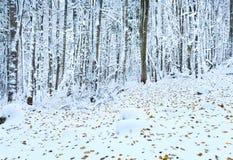 秋天第一个森林最后叶子雪冬天 库存照片
