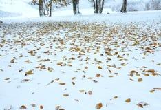 秋天第一个森林最后叶子雪冬天 库存图片