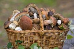 秋天篮子新鲜的充分的蘑菇 免版税库存照片