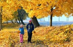 秋天系列槭树公园 免版税库存图片
