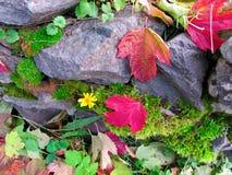 秋天红色叶子和青苔 免版税库存照片