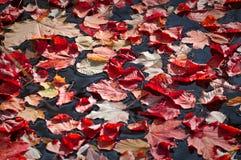 秋天红色叶子 免版税库存图片